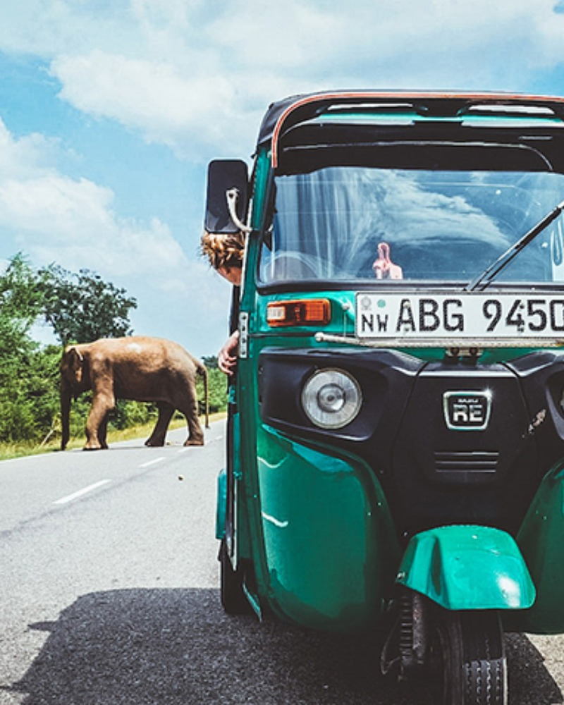 Picture of The TukTuk Trip